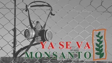 Monsanto-en-retirada-El-abajo-que-se-mueve_large
